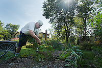 John Kaiser, proprietor of the Hamilton Club, weeds the garden.