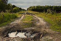 Muddy, spongey Hyde County, NC Monday, May 7, 2018. (Justin Cook for The Guardian)