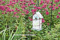 63821-207.06  Birdhouse in garden with Raspberry Wine Bee Balm (Monarda didyma 'Raspberry Wine')  Marion Co. IL