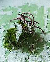Gastronomie: Oseille pourpre, Rumex scutatus Purpurea  de Joël Thiébault,   market gardener  // Gastronomy, sorrel, Rumex scutatus Purpurea , Joel Thiebault, maraicher - Stylisme : Valérie LHOMME