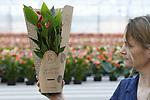 Foto: VidiPhoto<br /> <br /> BEMMEL &ndash; Drukte voor Valentijn bij Karma Plants in tuinbouwgebied Next Garden (Bergerden) in Bemmel. In lange, kleurige rijen staan 14 soorten in verschillende kleuren en potmaten klaar om via de bloemenveiligingen te vertrekken naar heel Europa. Negen soorten zijn zo exclusief dat alleen Karma ze levert. Marketingmanager Lydia Langelaan is bezig om het oubollige imago van de anthurium frisser en meer trendy in de markt te zetten.