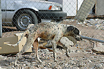 STRAY DOG IN LITTERED AREA OF SAN FELIPE MEXICO