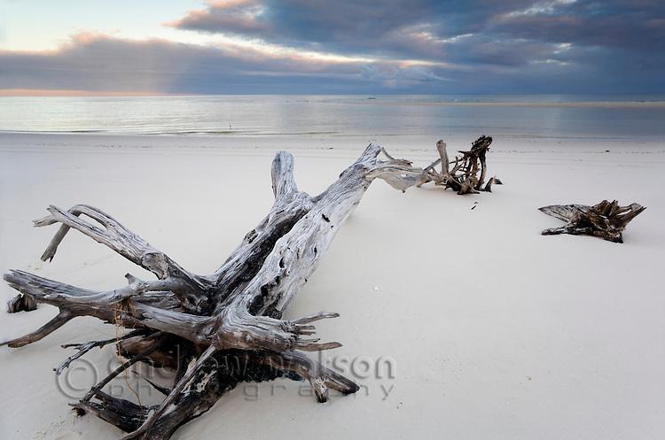 Driftwood on the beach, near Coongul Creek.  Fraser Island, Queensland, AUSTRALIA.