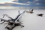 Driftwood on the beach, near Coongul Creek.  Fraser Island, Queensland, AUSTRALIA.