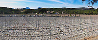 Domaine de Mas de Martin, St Bauzille de Montmel. The Pic St Loup mountain top peak. and The Montagne Massif de l'Hortus mountain cliff in the distance. Gres de Montpellier. Languedoc. Vines trained in Cordon royat pruning. Young vines. Terroir soil. In the vineyard. France. Europe. Mountains in the background. Soil with stones rocks. Calcareous limestone.