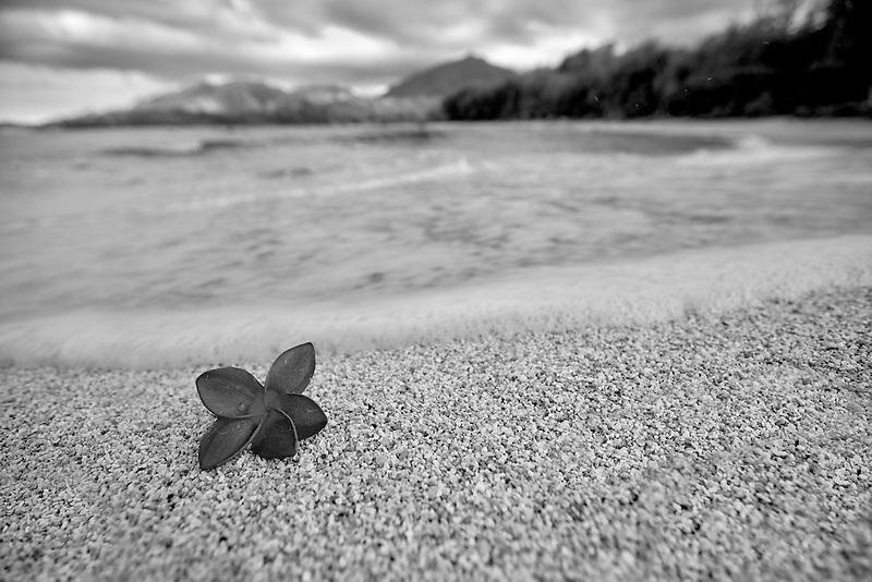 Red plumeria or frangipani on beach. Kauai, Hawaii