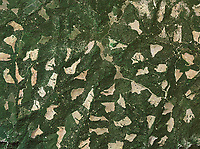 Aerial photo of clear cutting, forest in El Dorado County, California