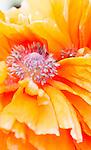 Floral Iphone 5 Tough Case Templates