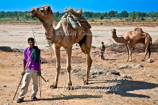 Camel shepherds in the Rajasthani countryside.<br /> (Photo by Matt Considine - Images of Asia Collection)
