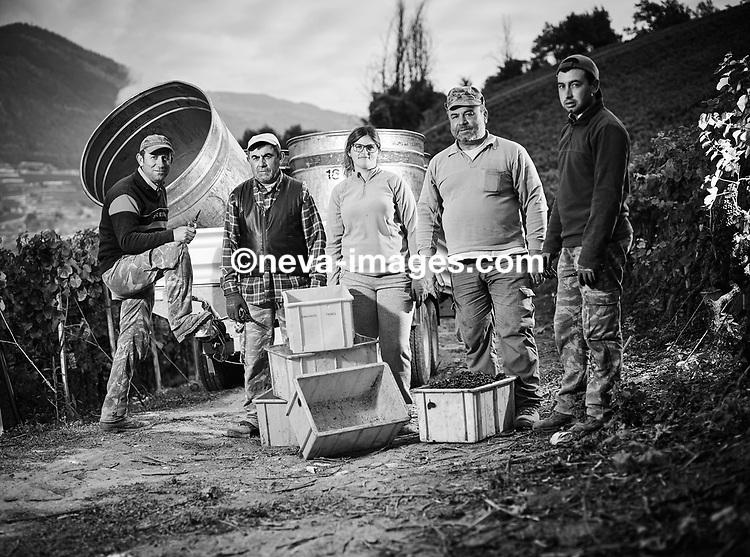 Sion, le 5 oct 2016,le team Thierry Constantin aux vendanges. © sedrik nemeth