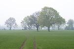 Europa, DEU, Deutschland, Nordrhein Westfalen, NRW, Niederrhein, Rheinland, Moers, Feld, Acker, Dunst, Baeume, Fruehling, Kategorien und Themen, Natur, Umwelt, Landschaft, Jahreszeiten, Stimmungen, Landschaftsfotografie, Landschaften, Landschaftsphoto, Landschaftsphotographie, Landwirtschaft, Agrarlandschaft, Agrar, Agrarwirtschaft, Anbau, Feld, Acker, Nutzpflanzen, Nutzpflanze......[Fuer die Nutzung gelten die jeweils gueltigen Allgemeinen Liefer-und Geschaeftsbedingungen. Nutzung nur gegen Verwendungsmeldung und Nachweis. Download der AGB unter http://www.image-box.com oder werden auf Anfrage zugesendet. Freigabe ist vorher erforderlich. Jede Nutzung des Fotos ist honorarpflichtig gemaess derzeit gueltiger MFM Liste - Kontakt, Uwe Schmid-Fotografie, Duisburg, Tel. (+49).2065.677997, schmid.uwe@onlinehome.de, www.image-box.com]