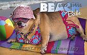 Samantha, ANIMALS,  photos,+dogs,++++,AUKPSP001,#A# Humor, lustig, divertido