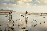 USA, Washington State, Long Beach Peninsula, International Kite Festival, Walter and Erin Ellison ride their bikes through the seagulls on the beach at low tide during sunset