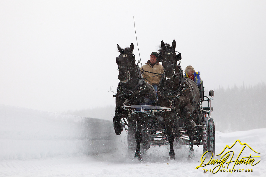 Jackson Fork Ranch world champion Percherons