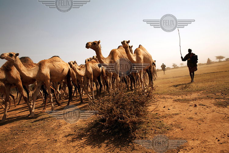 Nomads lead their camels to a watering hole in rural Somaliland. More than half the country's 3.5 million population are nomadic pastoralists with livestock being the country's major export.