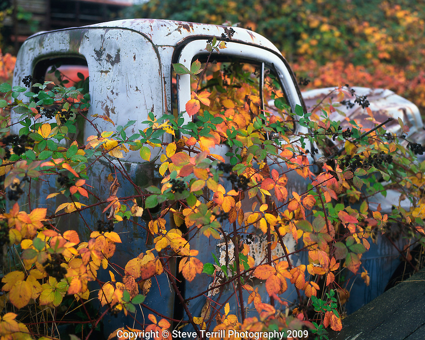 Abandoned pickup in Multnomah County Oregon