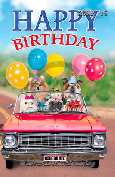 Samantha, ANIMALS, REALISTISCHE TIERE, ANIMALES REALISTICOS, funny, photos+++++Party Convertible Master,AUKP46,#a#