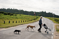 A Grandmother taking her baby grandson for a walk in the push chair, being followed by a black cat and a dog. The New Forest.
