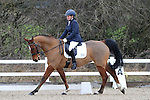 14/01/2017 - Class 4 - Affiliated dressage (BD) - Brook Farm Training Centre