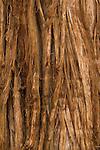 Bark of western juniper (Juniperus occidentalis)