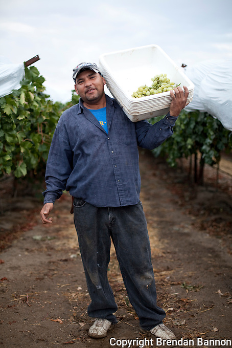 Farm worker near Arvan, CA