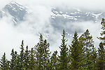 Rocky Mountains obscured by clouds in the background with spruce trees in the foreground - Lake Minnewanka, Banff National Park, Alberta Canada, July 2005.