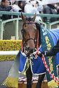 Horse Racing: Kisaragi Sho (NHK Sho)