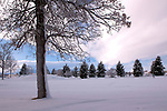 A wintery scene at Kirk Park in Bozeman Montana with snow covered tree in foreground and conifer trees in background.