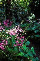 Orchid plants, Tropical Botanical Gardens, Hilo, Hawaii