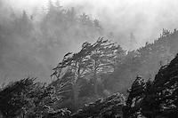 Forest and fog, Cape Perpetua, Oregon