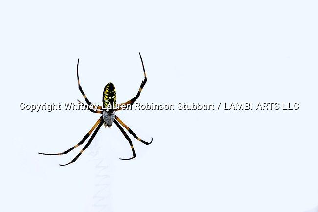 South Carolina Insect Photography