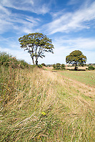 Ex oli seed rape field after harvest with field margins - Norfolk, August