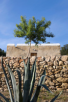 Flourishing in the dry landscape a large Agave grows next to one of the old stone walls that surround the house