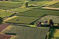 Europe/Europe/France/Midi-Pyrénées/46/Lot/Bélaye: le vignoble AOC Cahors dans un méandre de la vallée du Lot