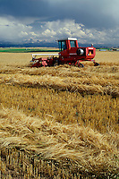 Windrowing barley near Ashton<br />