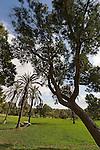 Israel, the Coastal Plain. Ashkelon National Park