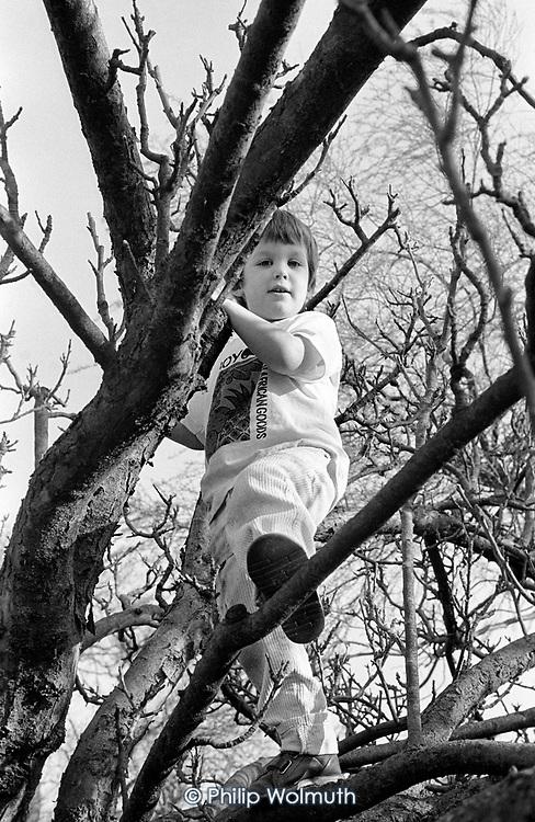 5 year-old boy climbing a tree, Buckinghamshire.