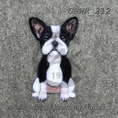Simon, REALISTIC ANIMALS, REALISTISCHE TIERE, ANIMALES REALISTICOS, innovative, paintings+++++SharonS_Frenchie,GBWR212,#a#, EVERYDAY dogs,breeds of dog,