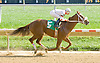 Stratoridge winning at Delaware Park on 10/10/12