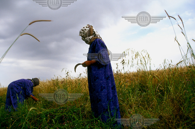Near the village of Baashika, two women harvest corn in their fields in the same way as has been done for thousands of years..