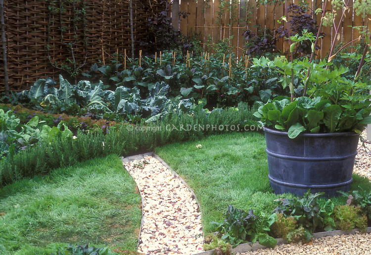 Backyard ve able gardening with path in lawn big pot container of sorrel and Angelica