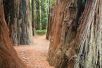 Jedediah Smith Redwood State Forest