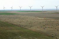 wind farms near Limon, Colorado