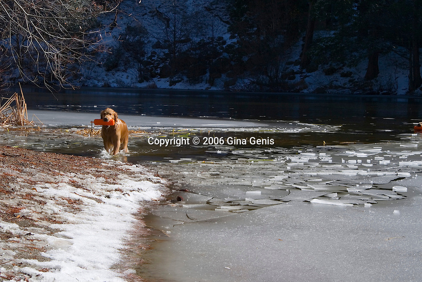 Dog breaking ice covering Lake Fulmor