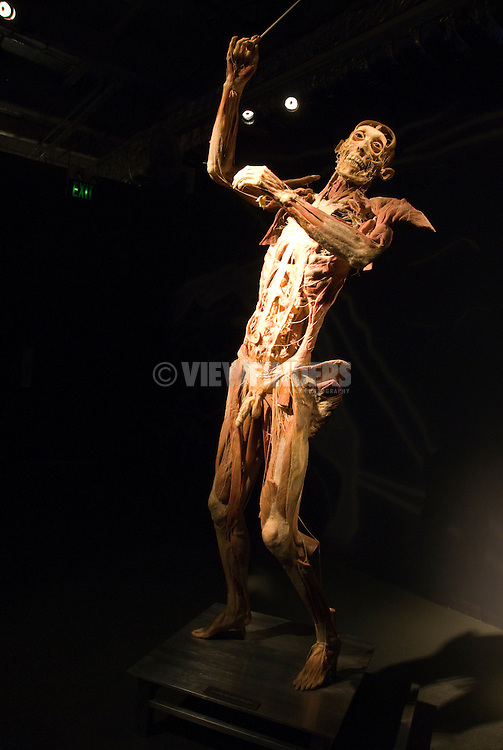 Body Worlds exhibit