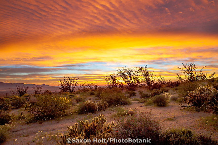 Sunrise and clouds and dawn light in Sonoran Desert at Anza Borrego California State Park