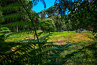 17th tee. 2018 Annika Australiasia Invitational Junior-Am at Royal Wellington Golf Club in Upper Hutt, Wellington, New Zealand on Friday, 14 December 2018. Photo: Dave Lintott / lintottphoto.co.nz