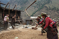Women beating wheat in Gatlang the first stop in the Tamang Heritage Trail. Nepal 03 May, 2013