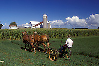 amish, farm, Indiana, An Amish farmer with a team of horses is cutting a green field in LaGrange County. A white barn with silos are in the background.