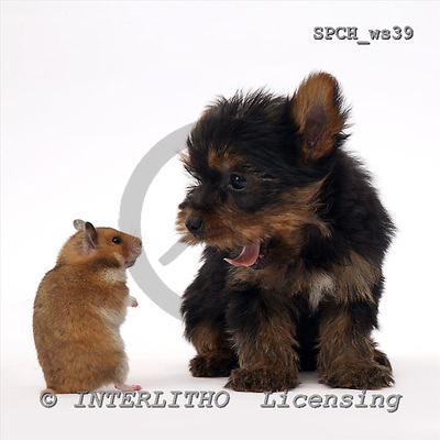 Xavier, ANIMALS, fondless, photos, SPCHWS39,#A#